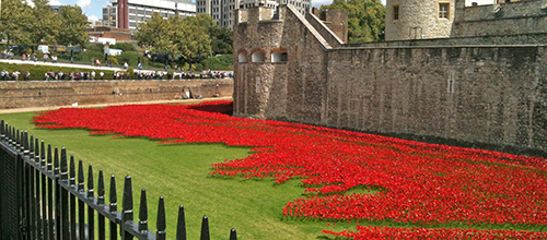 Poppies fill the moat…